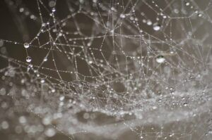 Dew build up on spiderweb